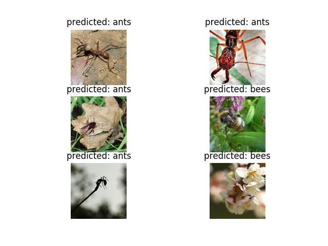 ハチとアリ推論結果